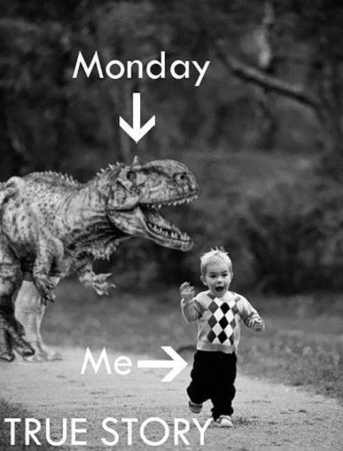 Monday Quotes Funny Brilliant 24 Inspirational Monday Quotes To Start Happy
