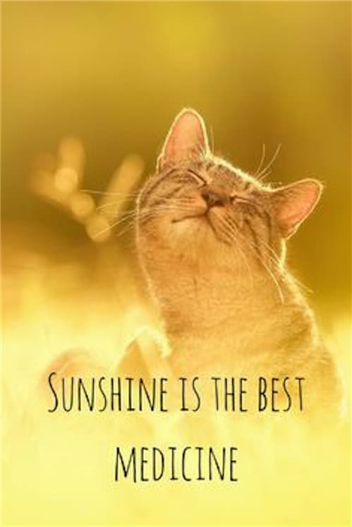 Good Morning Quotes Cat Sunshine