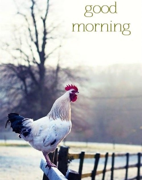 Good Morning Quotes Farm