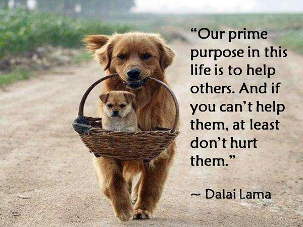 prime-purpose-love-pictures