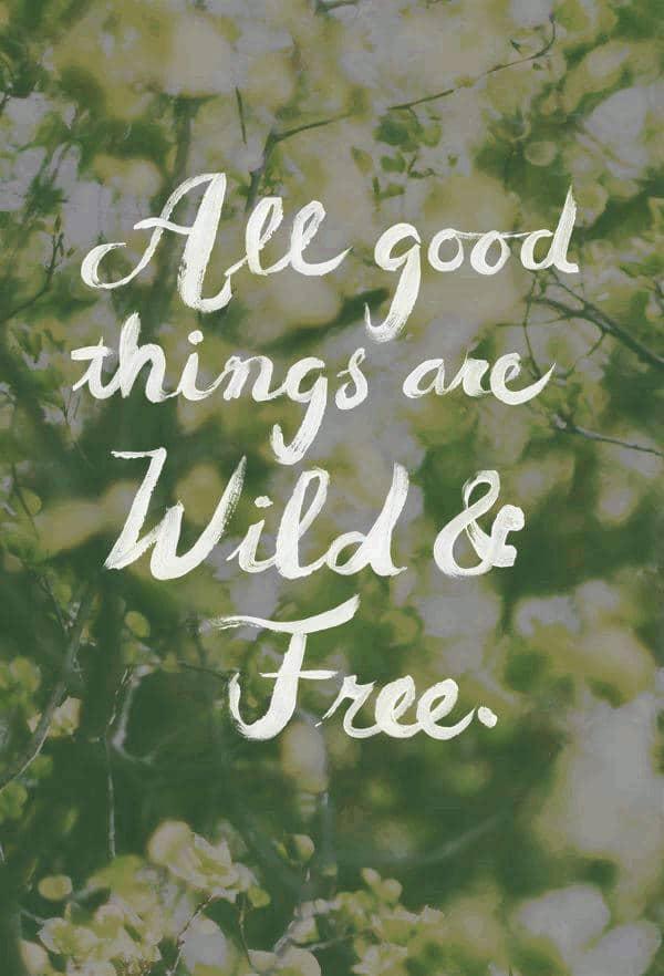 short quotes words of wisdom