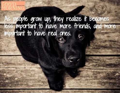 Best Friends Quotes Sayings Dog