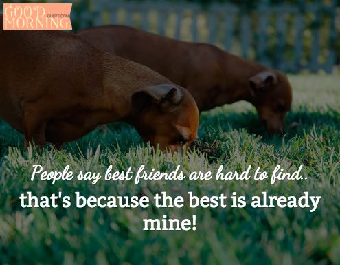 Funny Best Friends Quotes for Guys