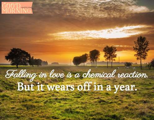 What is Love? A chemical reaction