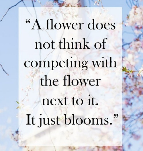 Flower Tuesday Quotes