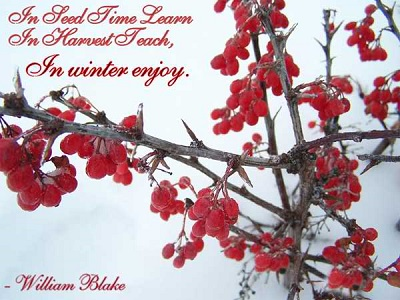 Cute Quotes About Winter