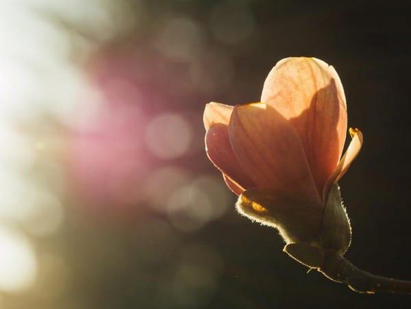 good morning photos flower sunlight