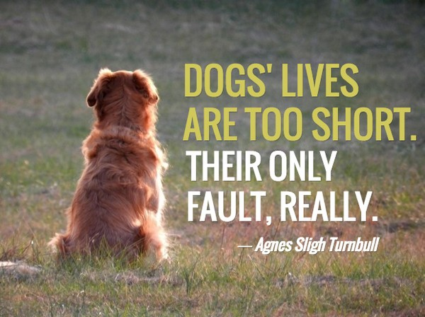 Dog Death Quote