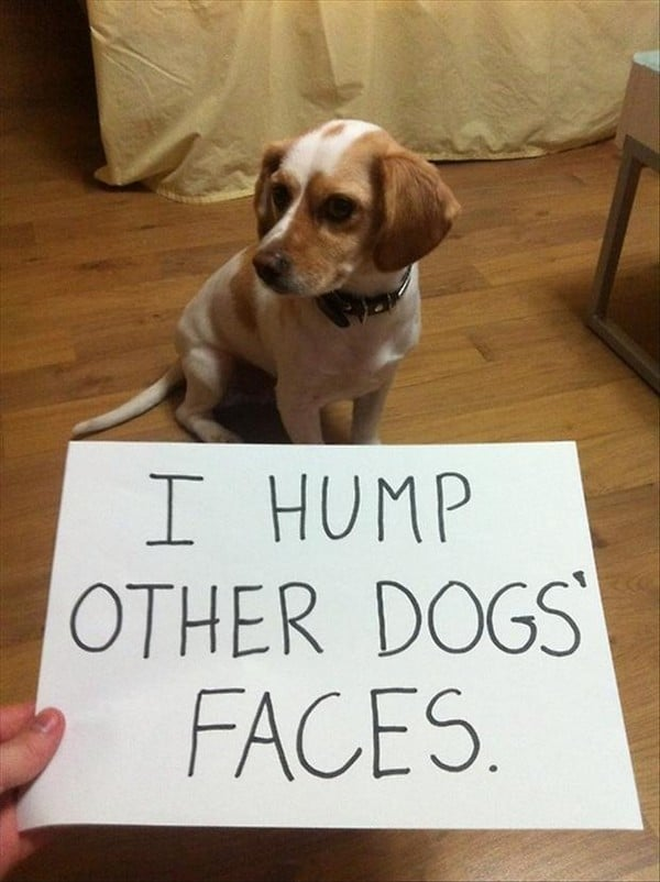Funny Dog Quotes With Images