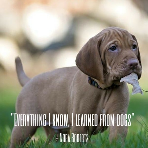 Dog Quote Roberts