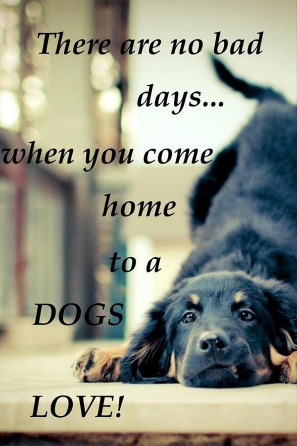 Quotes About Dog Friendship Entrancing 52 Funny Dog Quotes With Images  Good Morning Quote