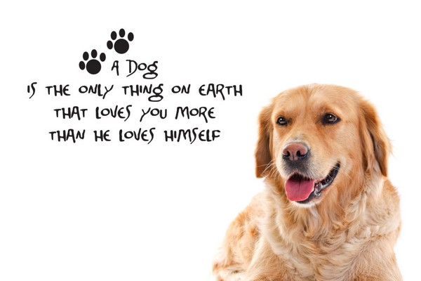 Love Dogs Quotes Wallpaper : 52 Funny Dog Quotes with Images - Good Morning Quote