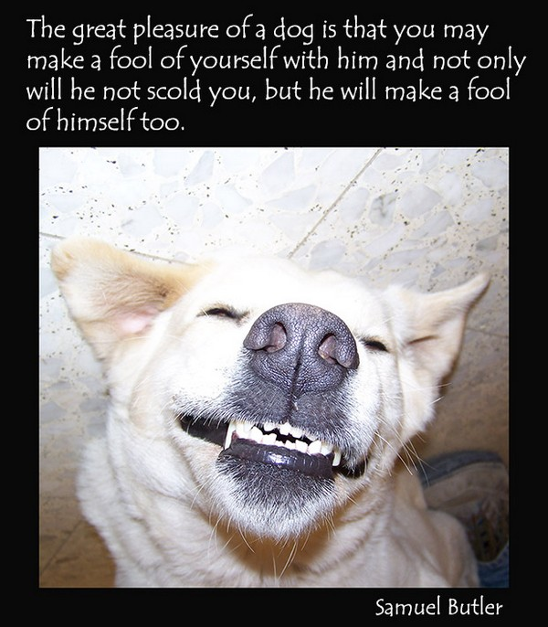 Dog Quotes Tumblr