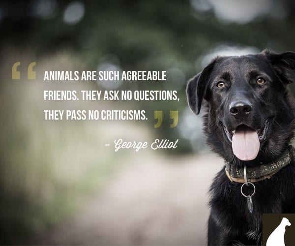 Famous Dog Quote