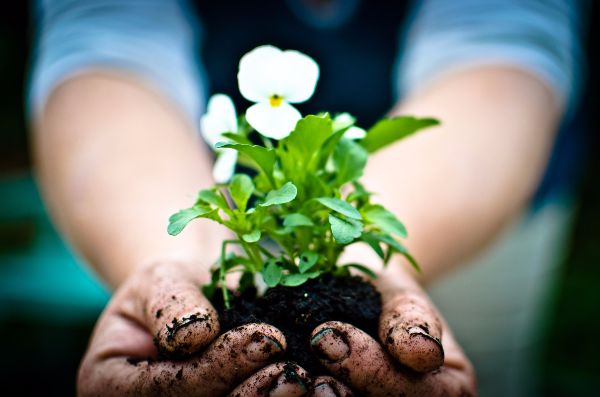 gardening benefits mental health
