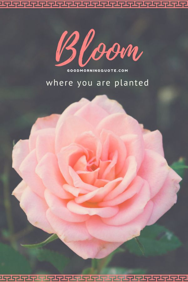 Blooming Spring Quotes