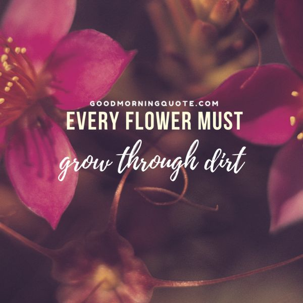 Flower Spring Quotes