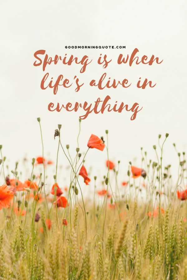 Life Spring Quotes