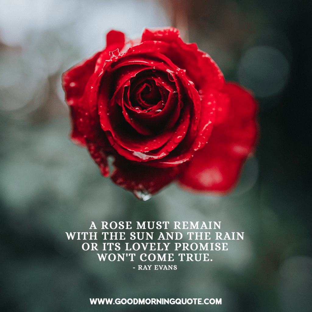 rose quotes, rose sayings, rose love quotes, red rose quotes, rose quotes, rose sayings, rose love quotes, white rose quotes, rose quotations, famous rose quotes, quotes about roses and love, dead rose quotes, rose quotes and sayings, rose captions, quotes about roses and life, pink rose quotes,