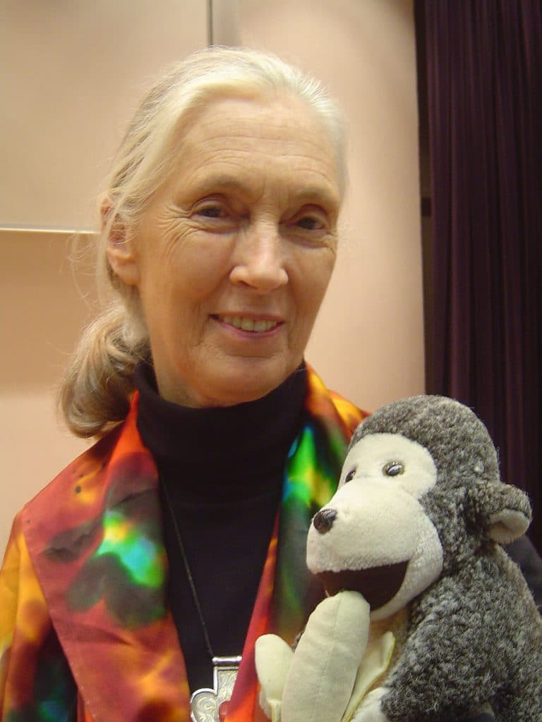 """Jane Goodall is holding her toy monkey """"Mr. H,"""""""
