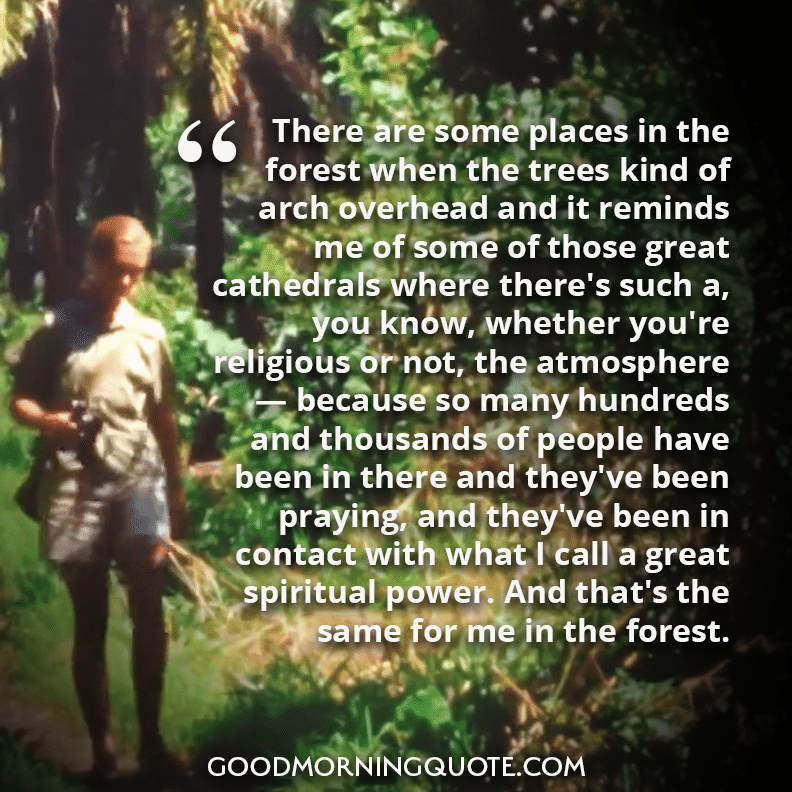Jane Goodall quote about the forest